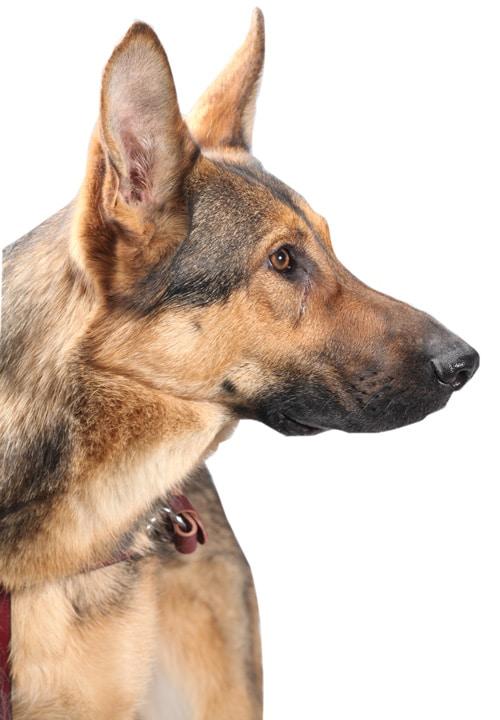 Fidelco Guide Dog