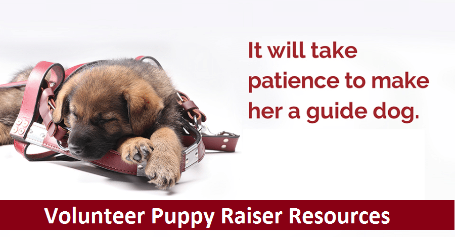 VPR Resources Header with Pup Sleeping in Harness