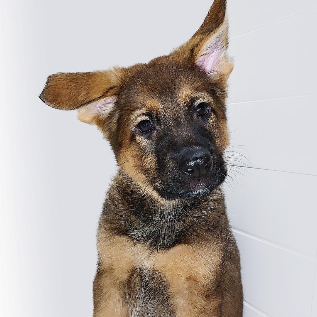 Puppy Raising 101 PUP Image