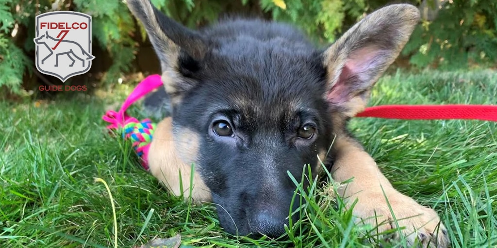 Puppy in grass to share on Twitter