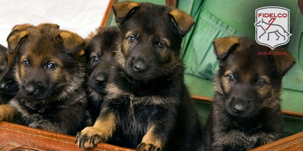 Puppy image for Twitter