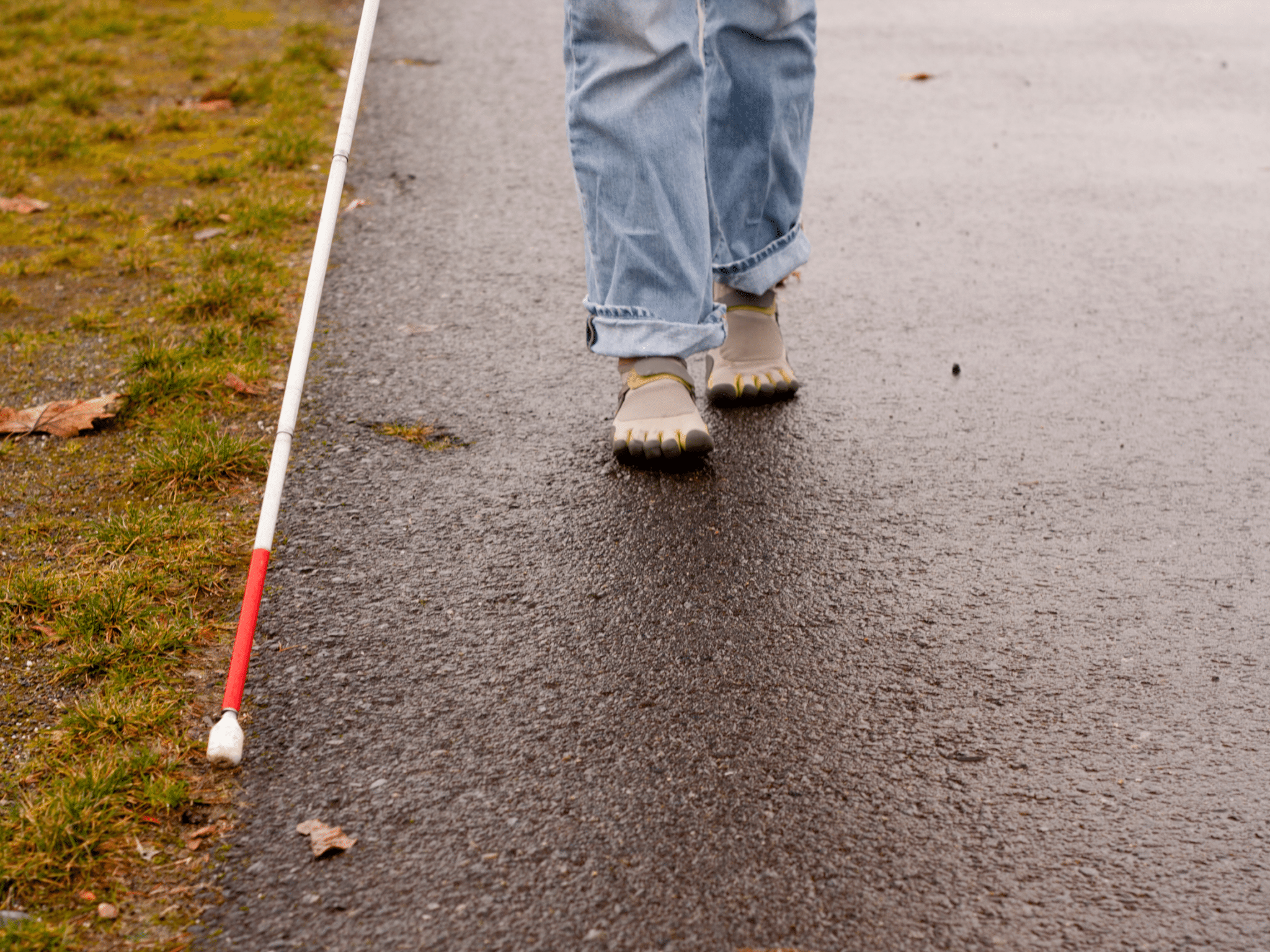 A person walking towards forward on pavement in jeans and gray shoes with a white cane extended in front of them on the edge of the pavement and the grass on the left.